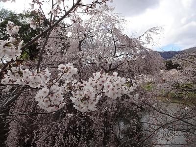 上田城千本桜祭り